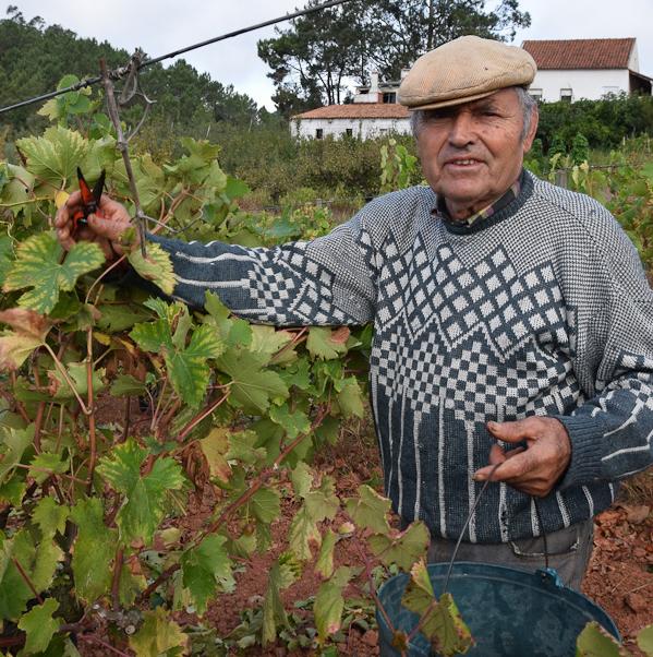 Francisco: 80 jaar