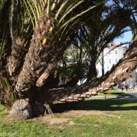 Lissabon: het MAAT museum, een nieuwe attractie in Belém