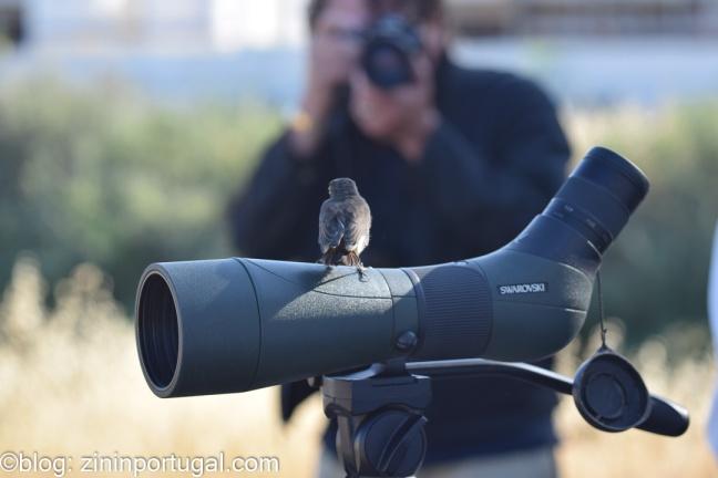 Vogel poseert