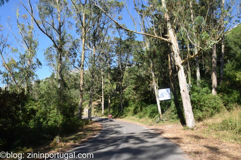 Eucalyptus_en motor