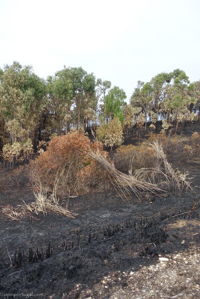 #zininportugal brand_oktober_2017