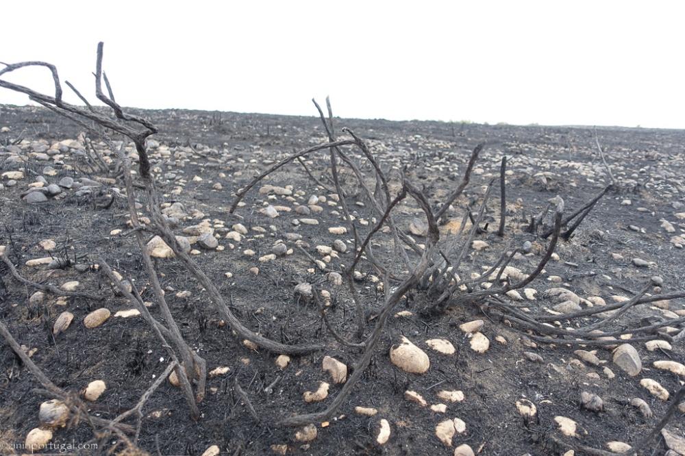 #zininportugal brand_oktober_2017_04