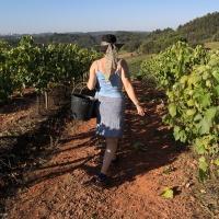 Vindíma: plukken, eten en samen wijn maken