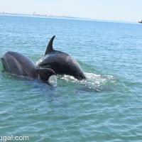 Palmela en Setúbal: wijn en dolfijnen